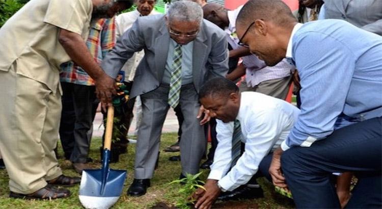La Jamaïque a planté son premier plant légal de cannabis