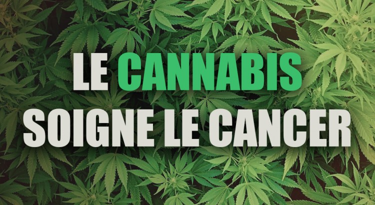 le cannabis soigne le cancer