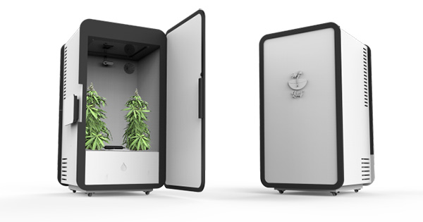 Leaf la start up qui veut revolutionner la culture indoor for Mini chambre de culture cannabis