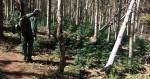 Albanie, Colorado, Texas : sale temps pour les cultivateurs clandestins !