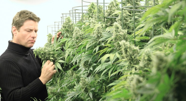 Arjan Roskam, le roi du cannabis