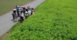 L'histoire secrète du cannabis au Japon