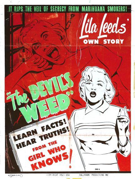 Devils cannabis