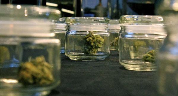 La majorité des variétés actuelles de cannabis ont été sélectionnées et cultivées pour leur concentration de quel cannabinoïde ?