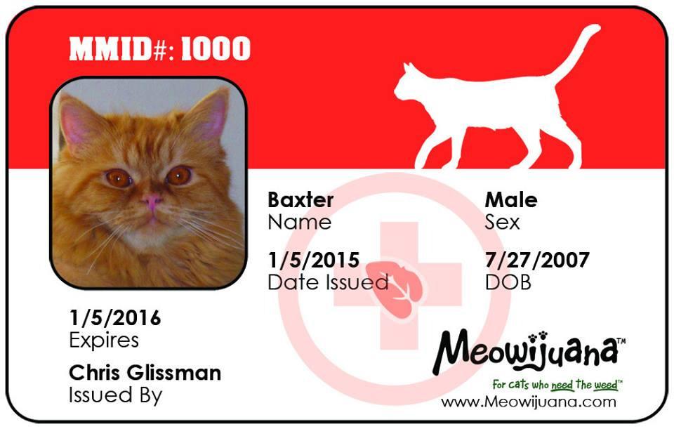 Carte médicale pour chat