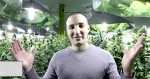 Une chambre de culture de cannabis à Montréal