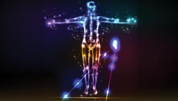 Quel cannabinoïde a amené les scientifiques à découvrir le système endocannabinoïde chez les vertébrés (et donc chez les humains) ?