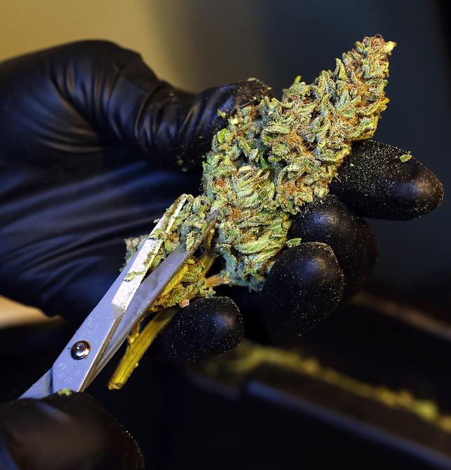 Nettoyage des têtes de cannabis