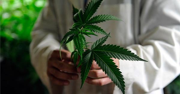 Une étude payée 3000$ pour fumer du cannabis