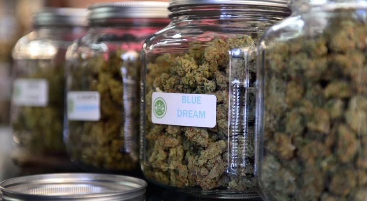 Travailler dans le monde du cannabis