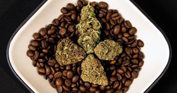 Modifier le goût du cannabis
