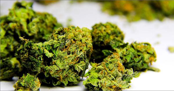 L'évolution du cannabis