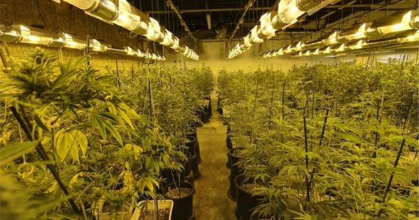 Le futur des dispensaires de cannabis en France