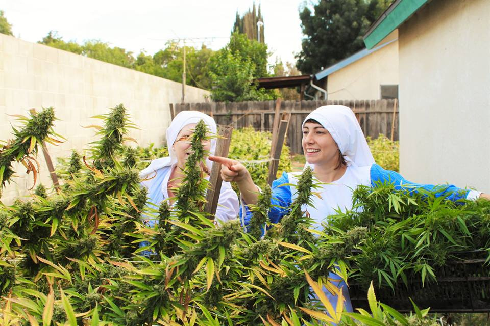 Nonnes du cannabis
