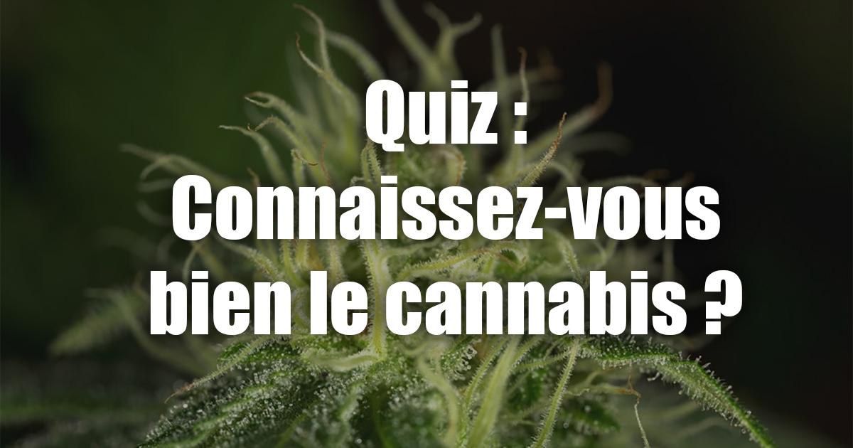 Quiz sur le cannabis