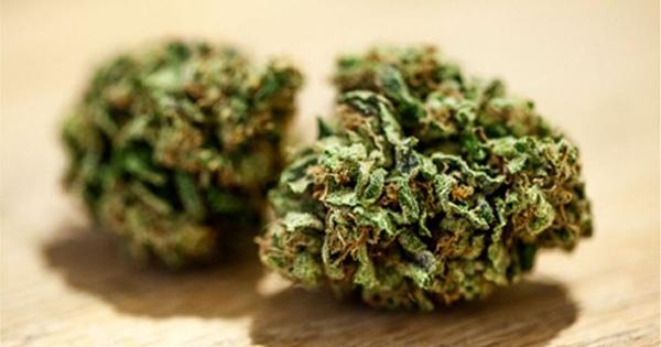 Cannabis médical en Australie