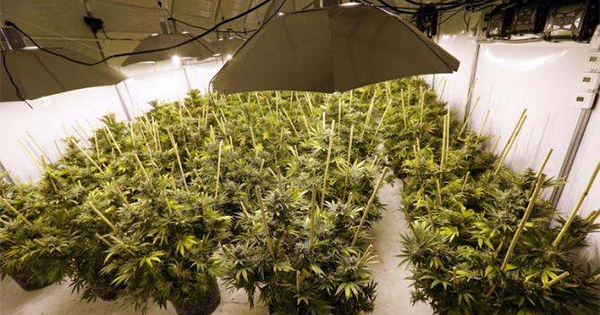 Bilan des ventes de cannabis en 2015