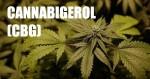 Le cannabigerol (CBG) : le régulateur des cannabinoïdes