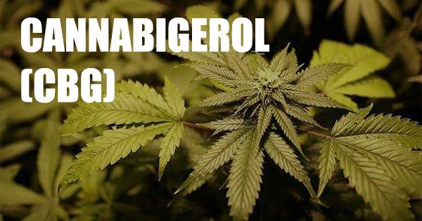 Cannabigerol