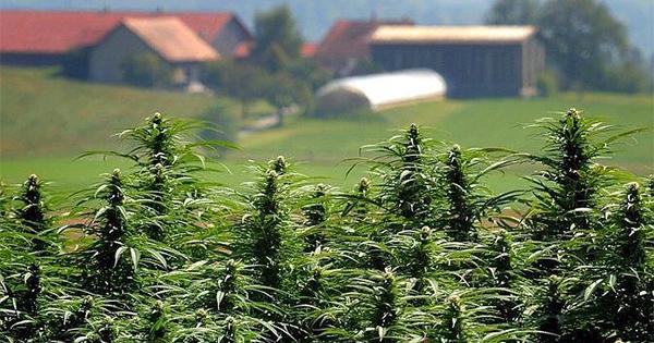 Cannabis club en Suisse