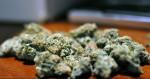 La variété de cannabis la plus vendue en 2015 est…