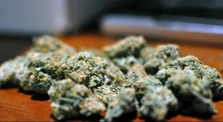 Variété de cannabis la plus vendue