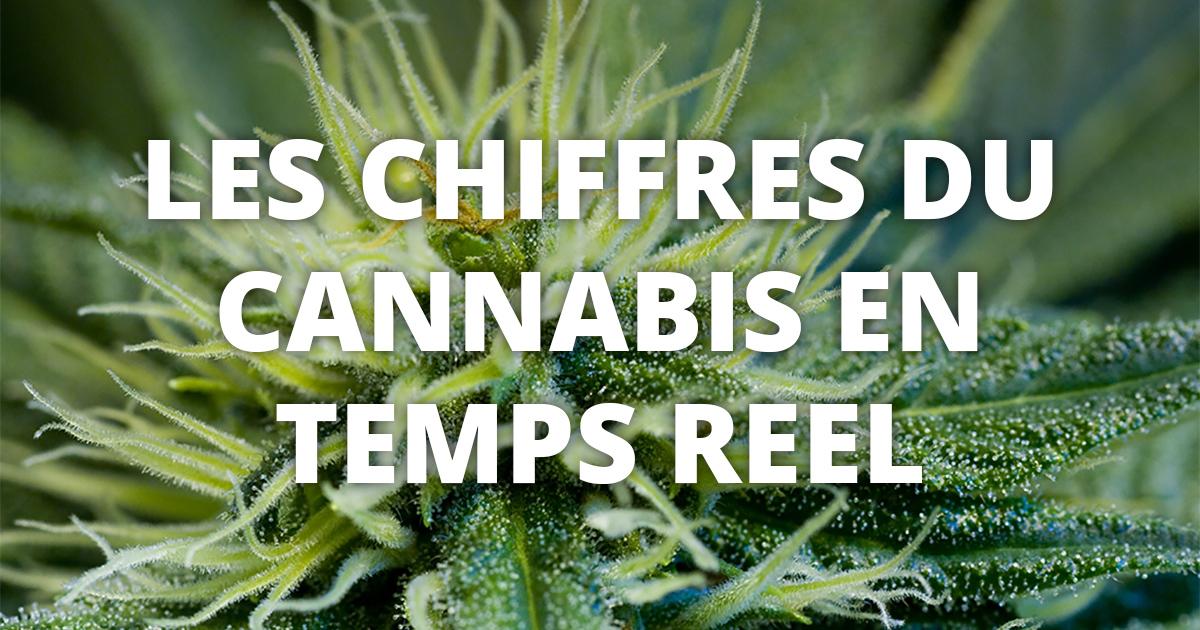 statistiques sur le cannabis