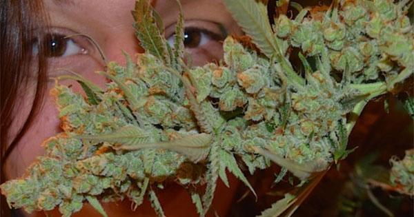 Différents effets du cannabis