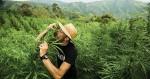 Au début du cannabis : les variétés landrace