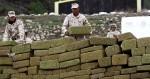 La production de cannabis au Mexique décline au fil des légalisations américaines