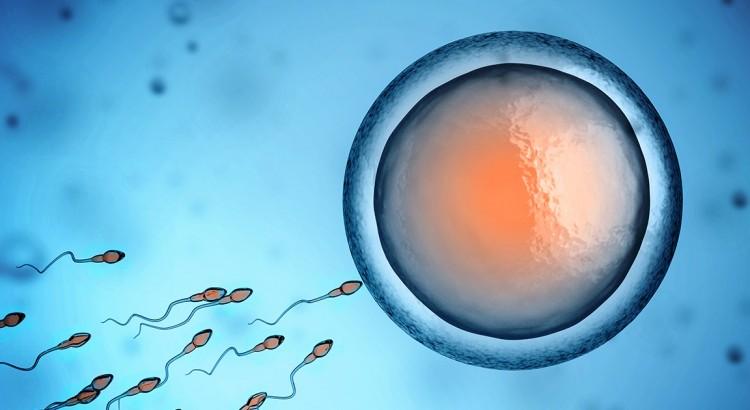 Cannabis et fertilité