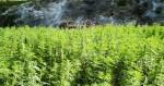 La plupart du cannabis européen vient toujours du Maroc