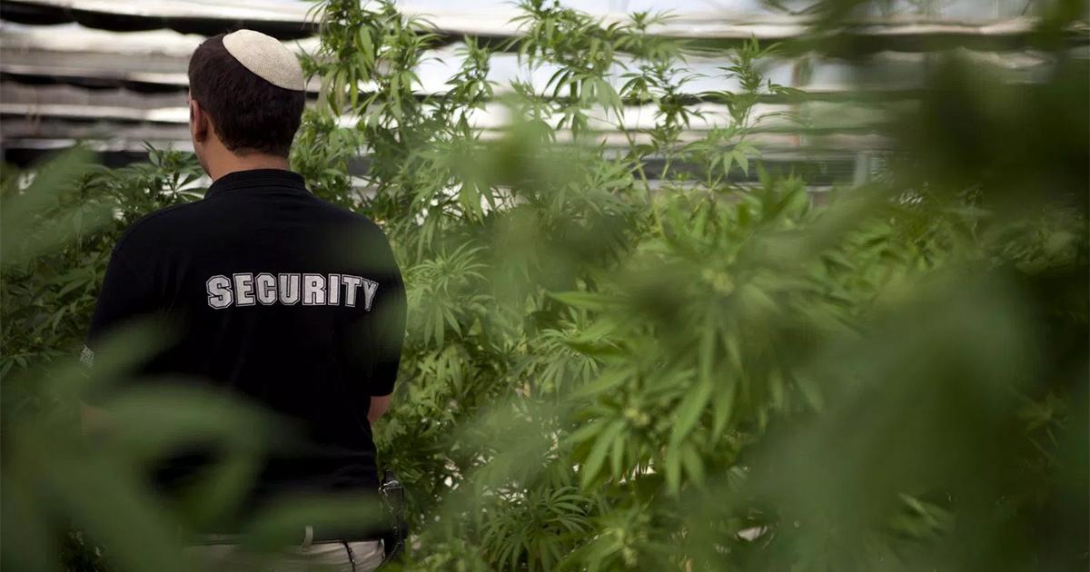 Israël et l'industrie du cannabis