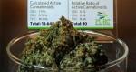 Le cannabis du Colorado est-il trop fort ?