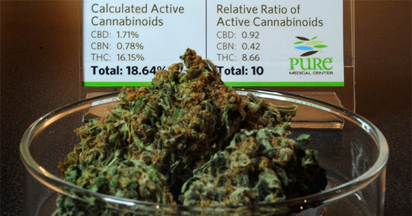cannabis trop puissant au Colorado