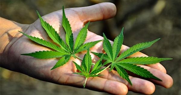 La DEA approuve une étude sur le cannabis