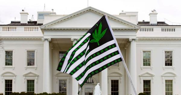 Manifestation de militants pro-cannabis aux Etats-Unis