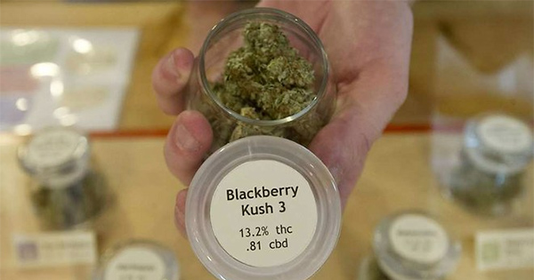 Légalisation du cannabis médical en Allemagne