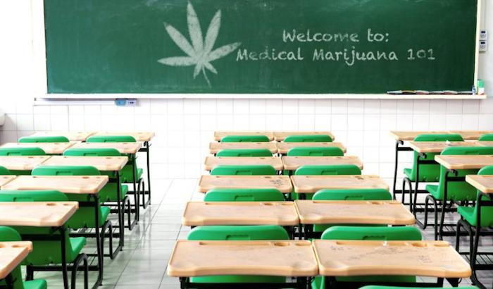 écoles cannabis