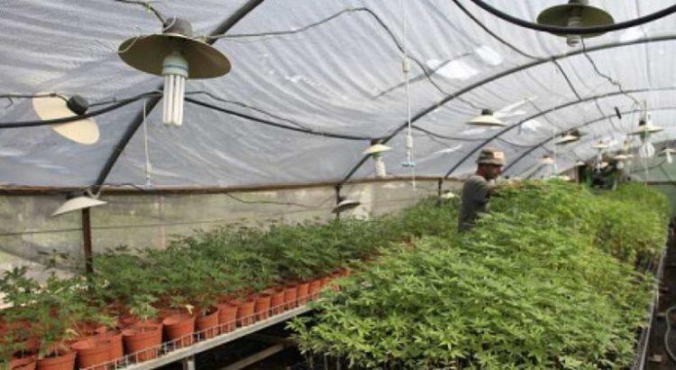 Cannabis médical en Israël