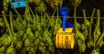 Irlande : une députée propose une légalisation du cannabis médical