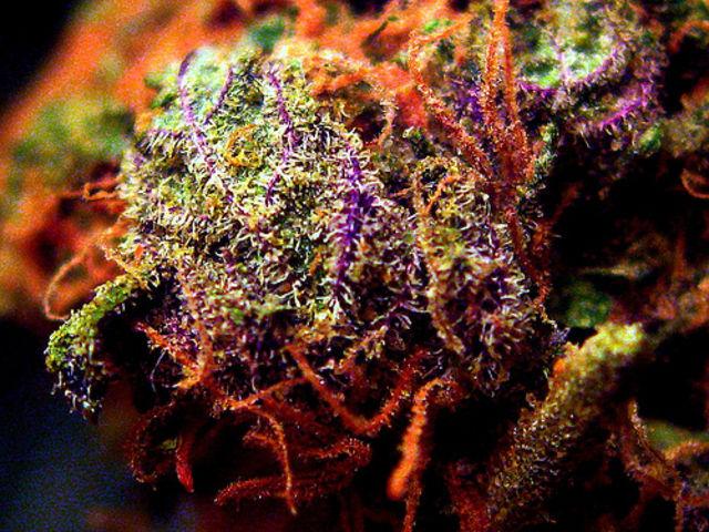 quiz que connaissez vous du cannabis newsweed. Black Bedroom Furniture Sets. Home Design Ideas