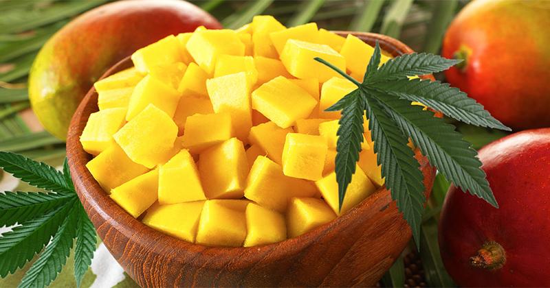 Mangue et cannabis