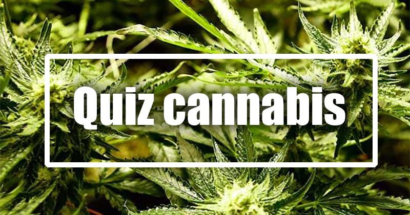 Quiz sur le cannabis