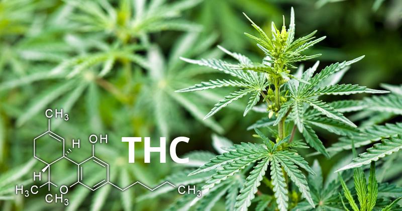 définition du THC