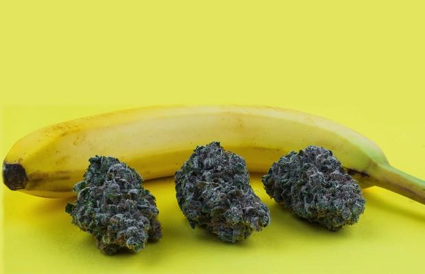 5 vari t s de cannabis les plus fortes du monde   newsweed