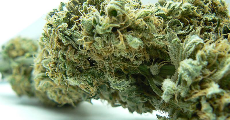 Les variétés de cannabis les plus fortes du monde
