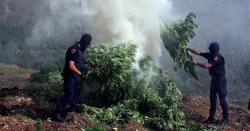 Plantations de cannabis en Albanie