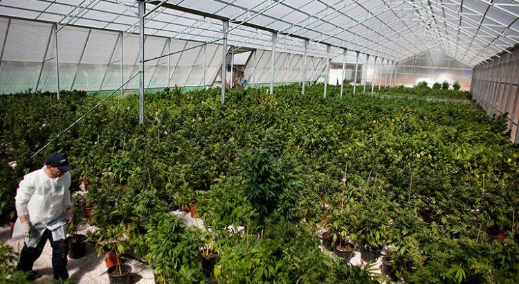 Cannabis au Michigan