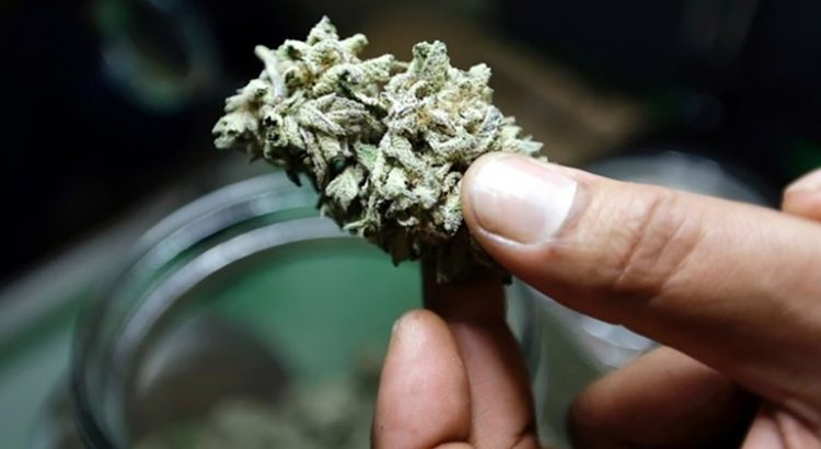 Légalisation du cannabis à Lausanne
